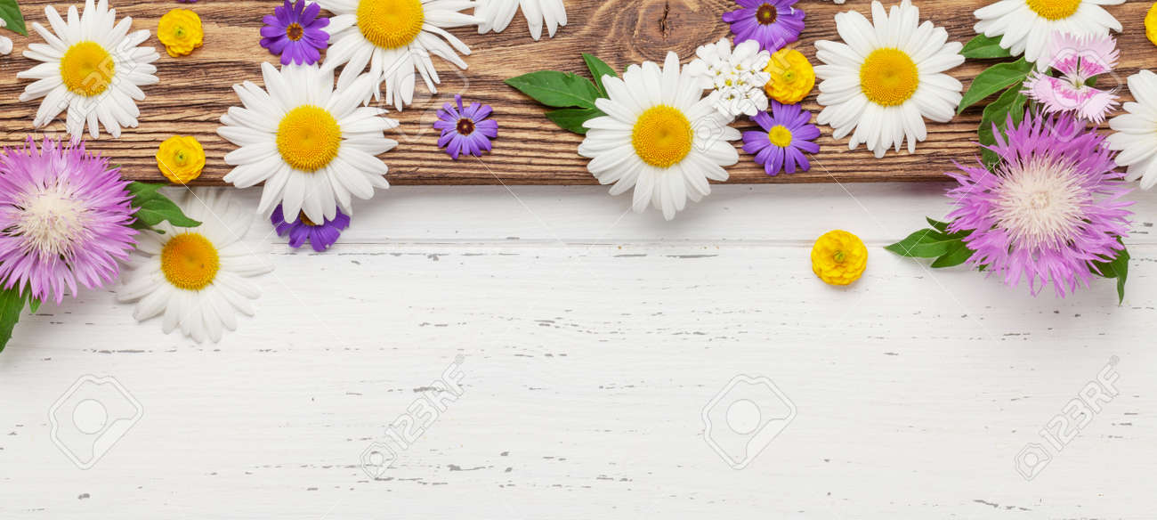 Various colorful garden flowers over wooden background. Greeting card template. Top view flat lay with copy space - 169549654