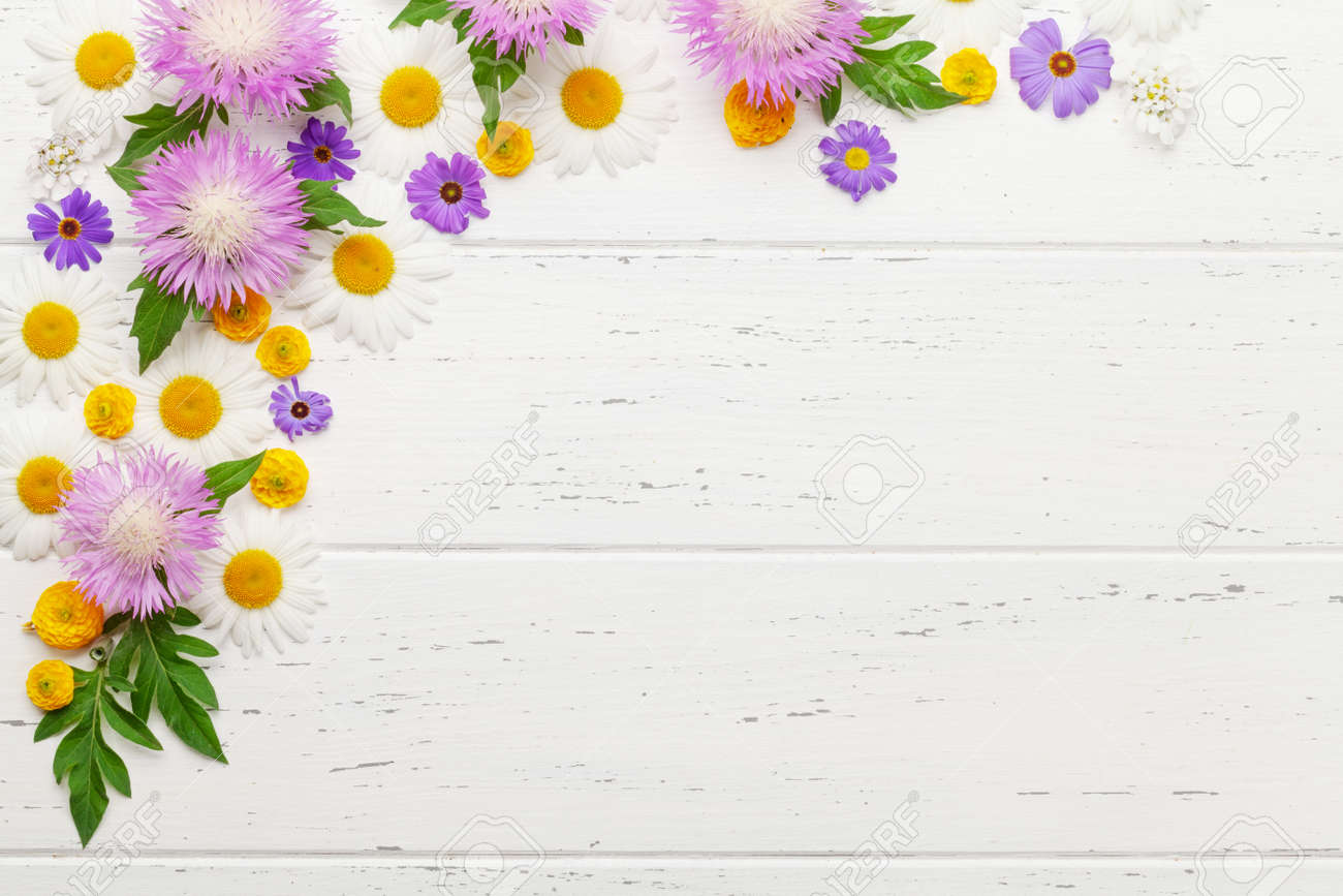 Various colorful garden flowers over wooden background. Greeting card template. Top view flat lay with copy space - 169549688