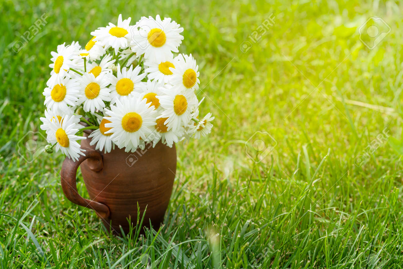 Wild chamomile bouquet on summer grass lawn. With copy space - 169549800