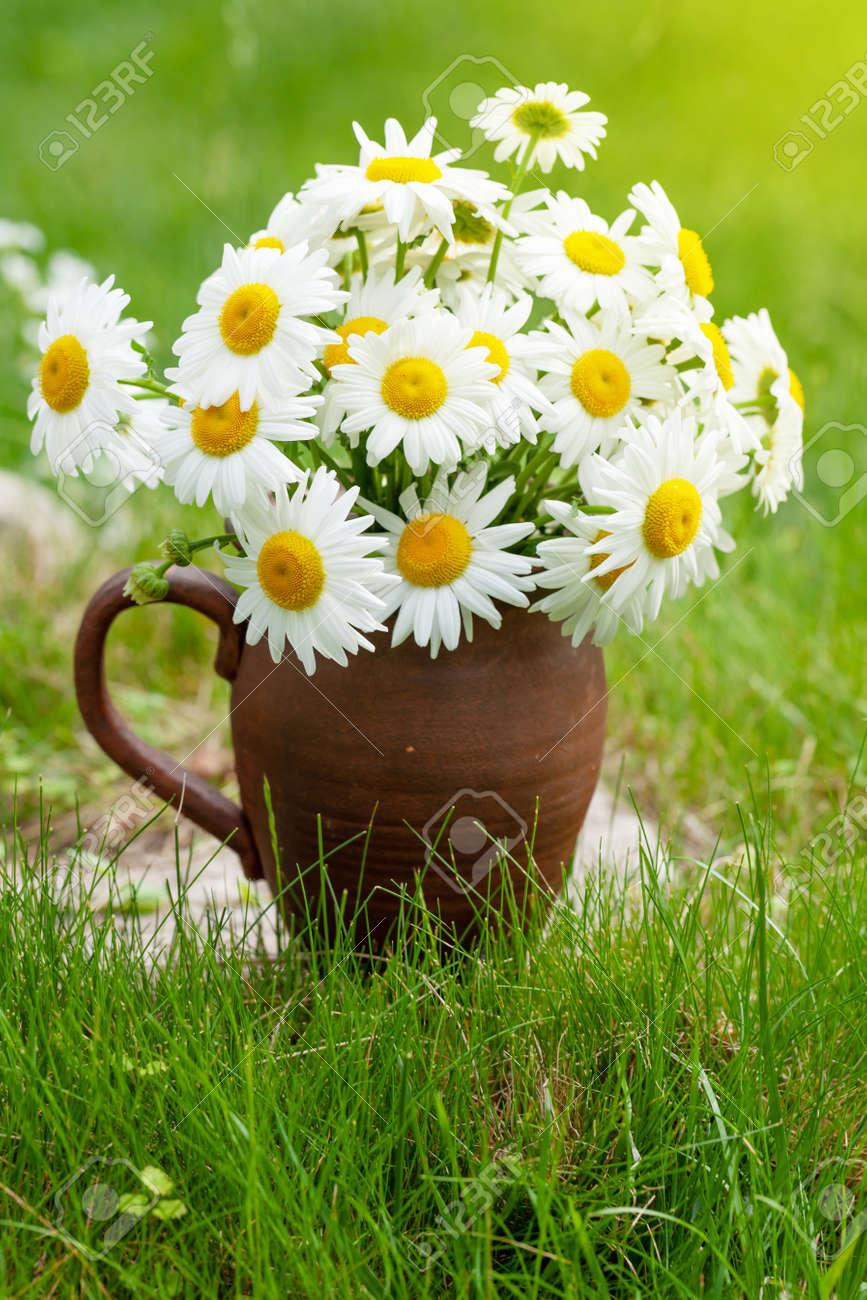 Wild chamomile bouquet on summer grass lawn - 169549879