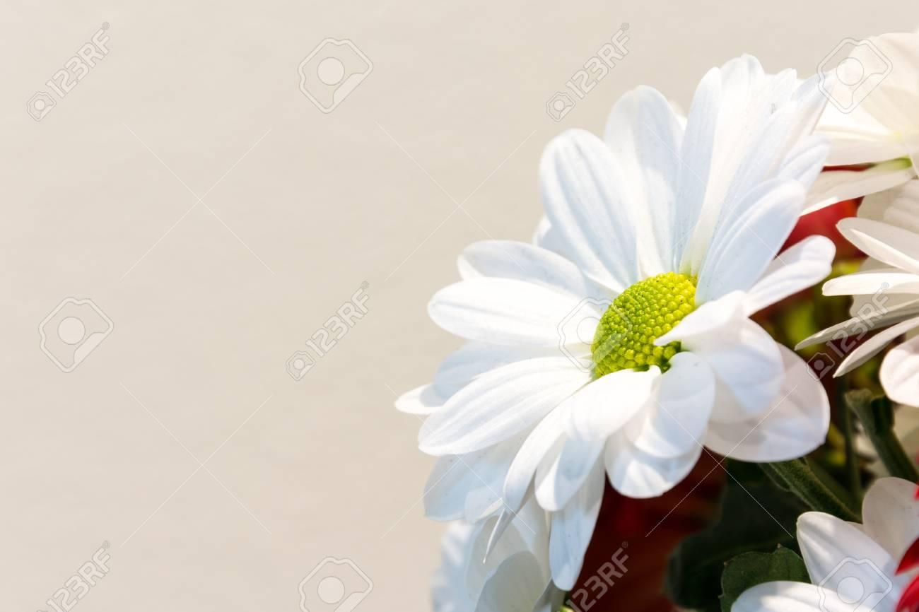 Ein Grosser Blumenstrauss Der Liebe Blumenstrauss Und Ganseblumchen