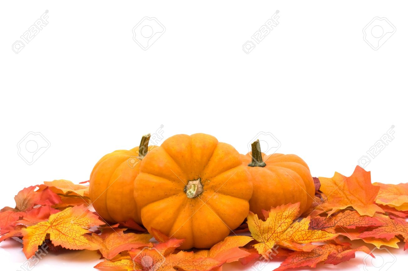 pumpkins with fall leaves isolated on white autumn scene stock photo 7837177 - Fall Pumpkins