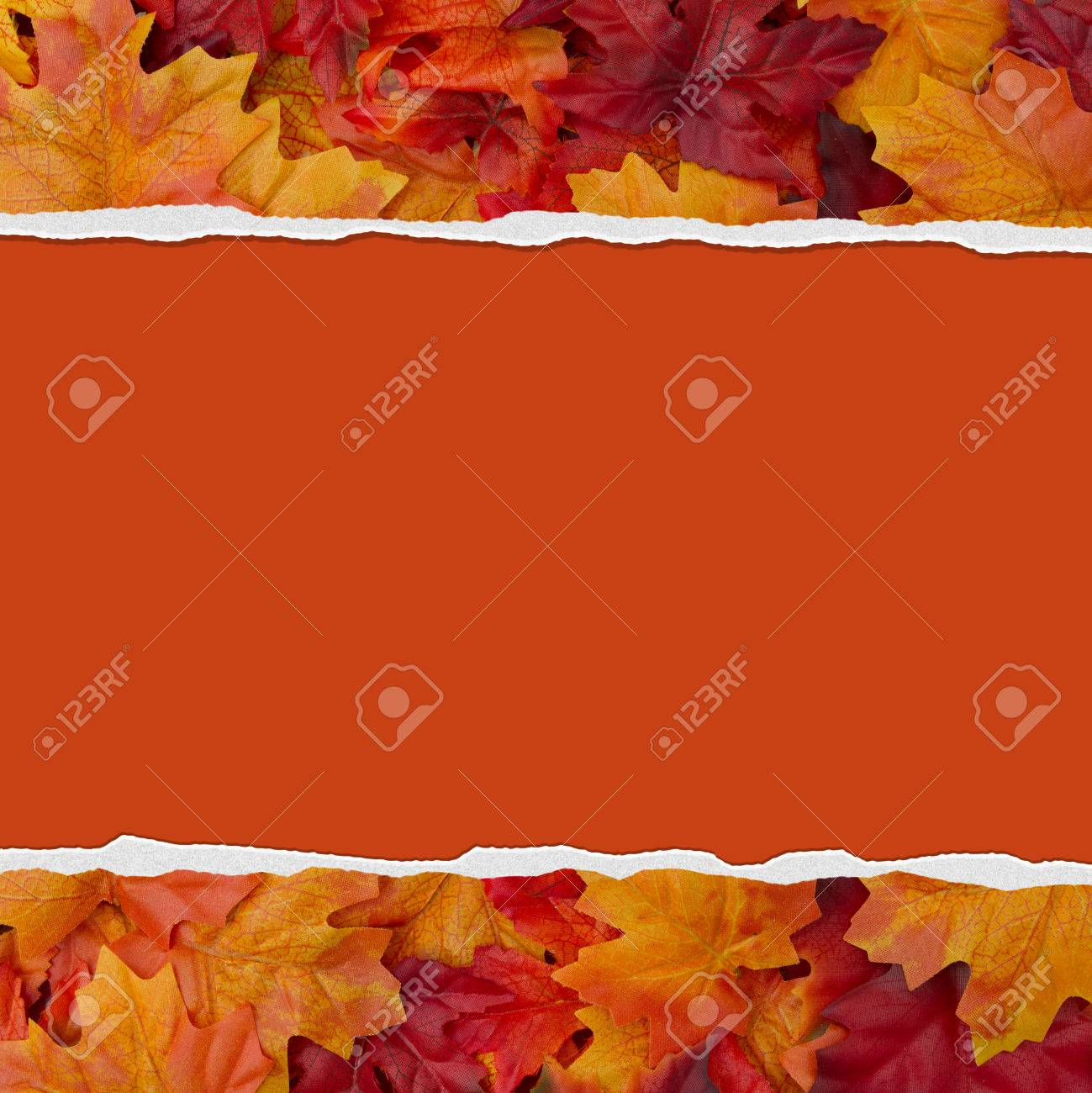 autumn leaves torn background for your message or invitation stock