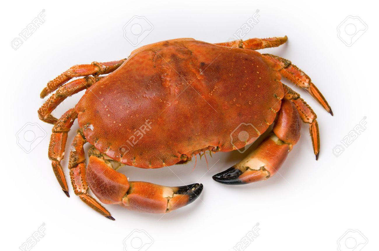 Prepared crab on white background Stock Photo - 8509568