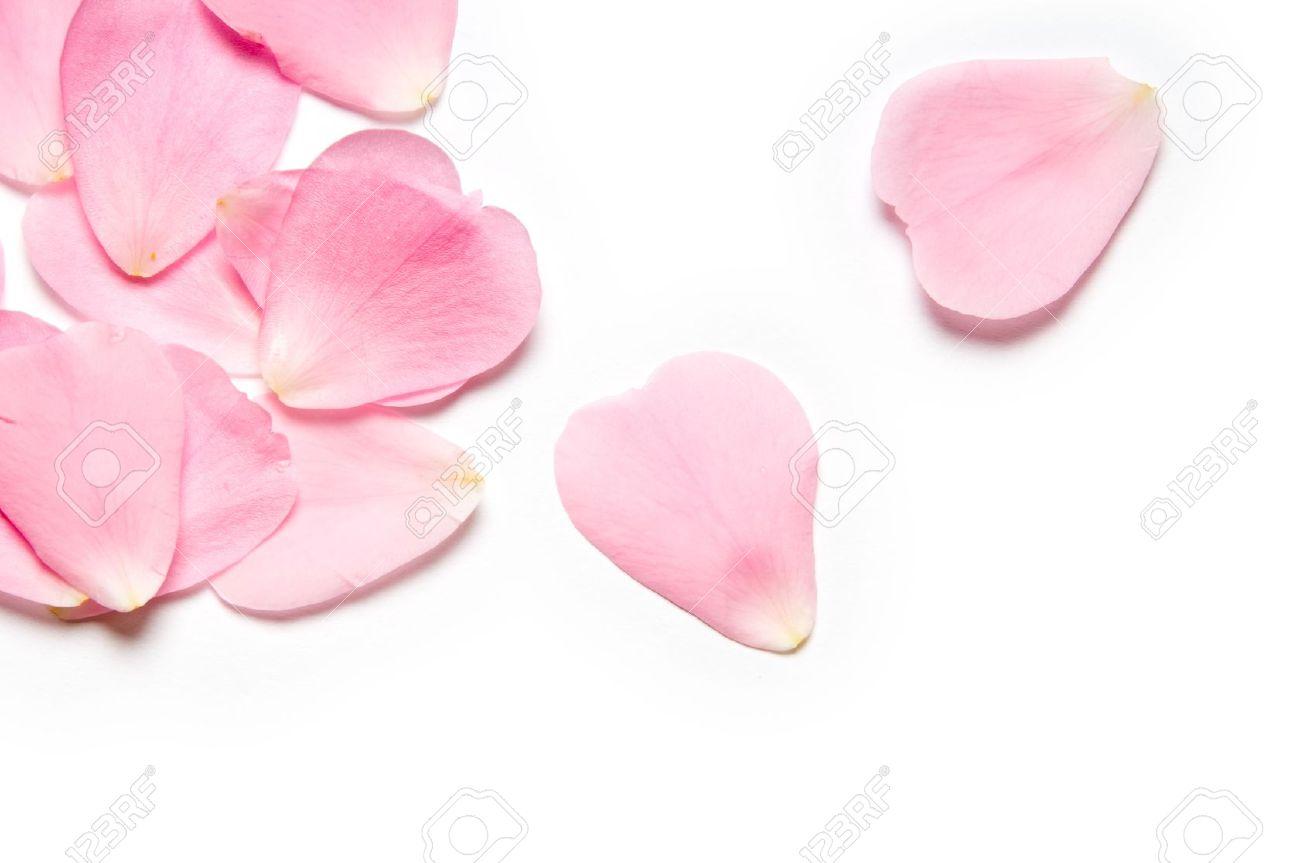 Rose Petals White Background