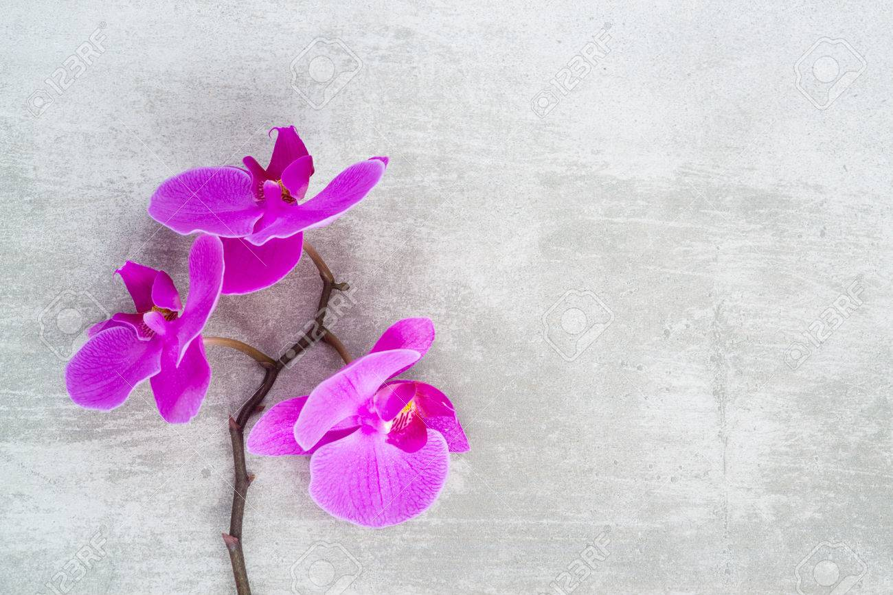 More Similar Stock Images Of Purple Orchid Flowers Frame On White Background