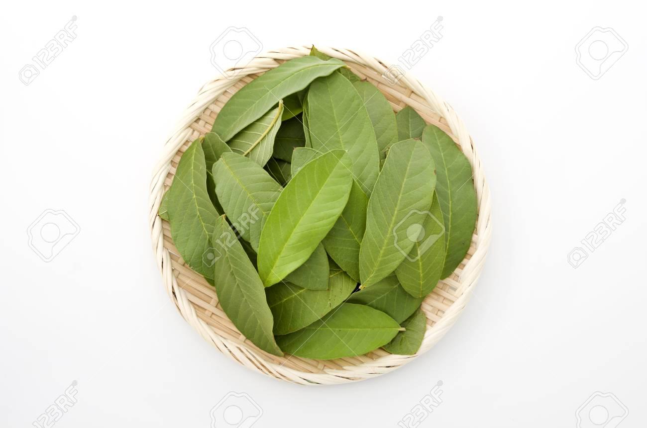 guava leaf - 95877719