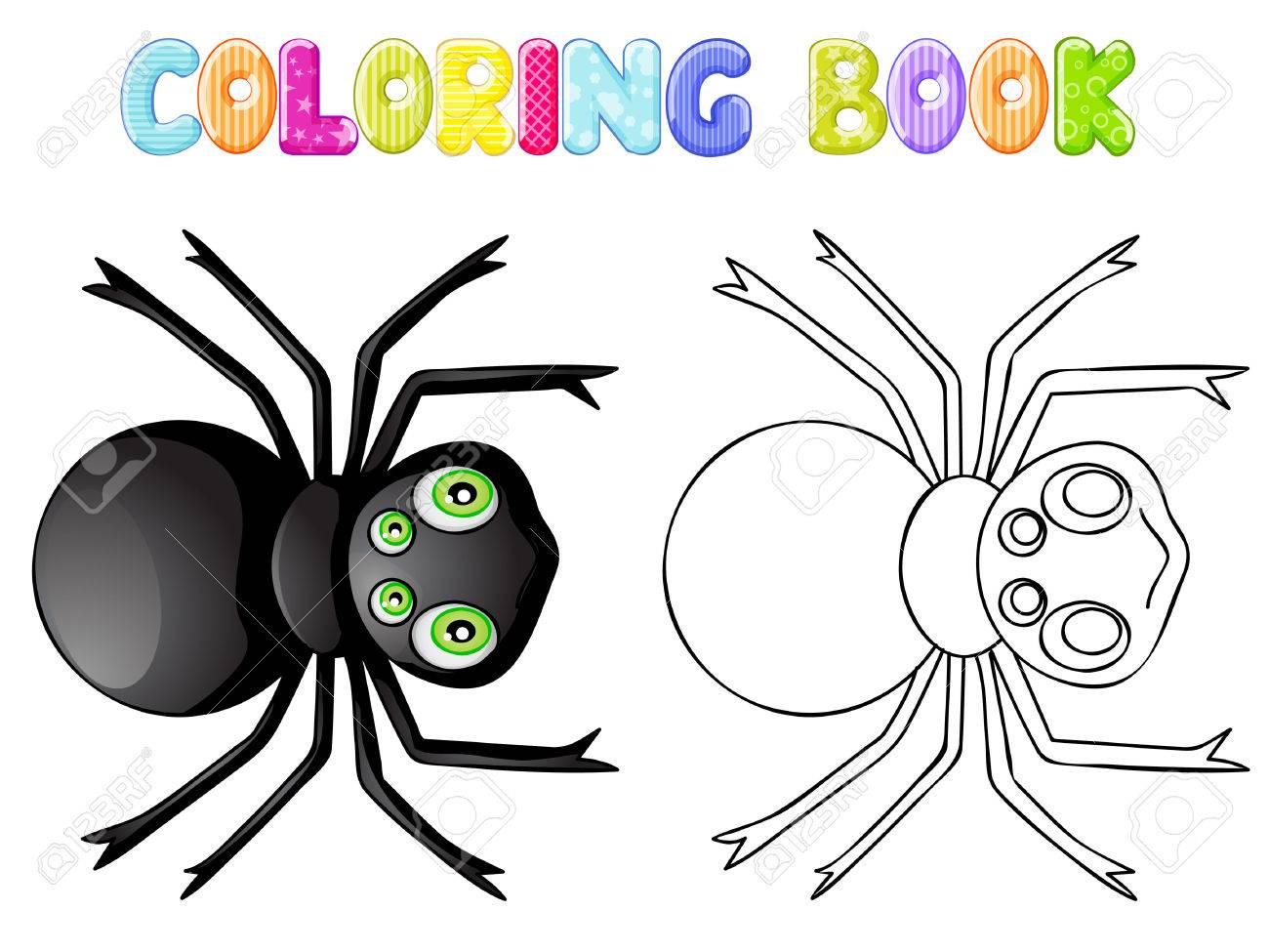 Araña Para Colorear Fotos Retratos Imágenes Y Fotografía De