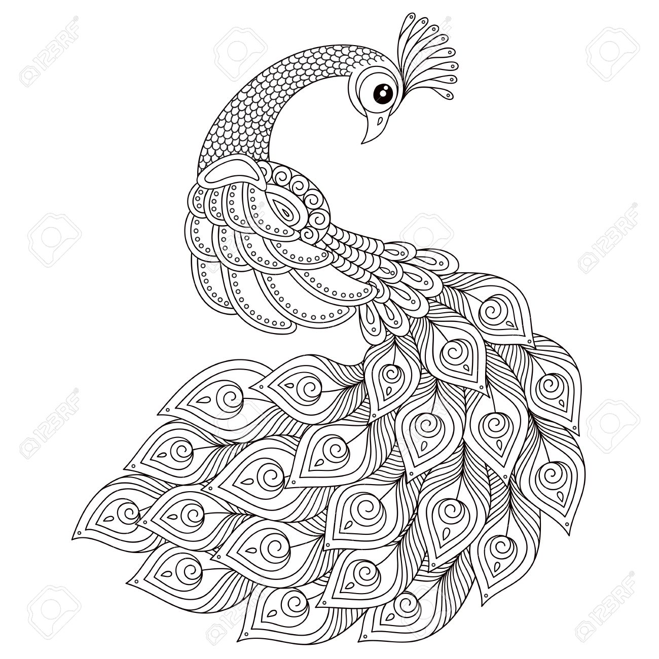 Peacock. Adult antistress coloring page. Black and white hand drawn doodle for coloring book. Isolated on white background - 55847685
