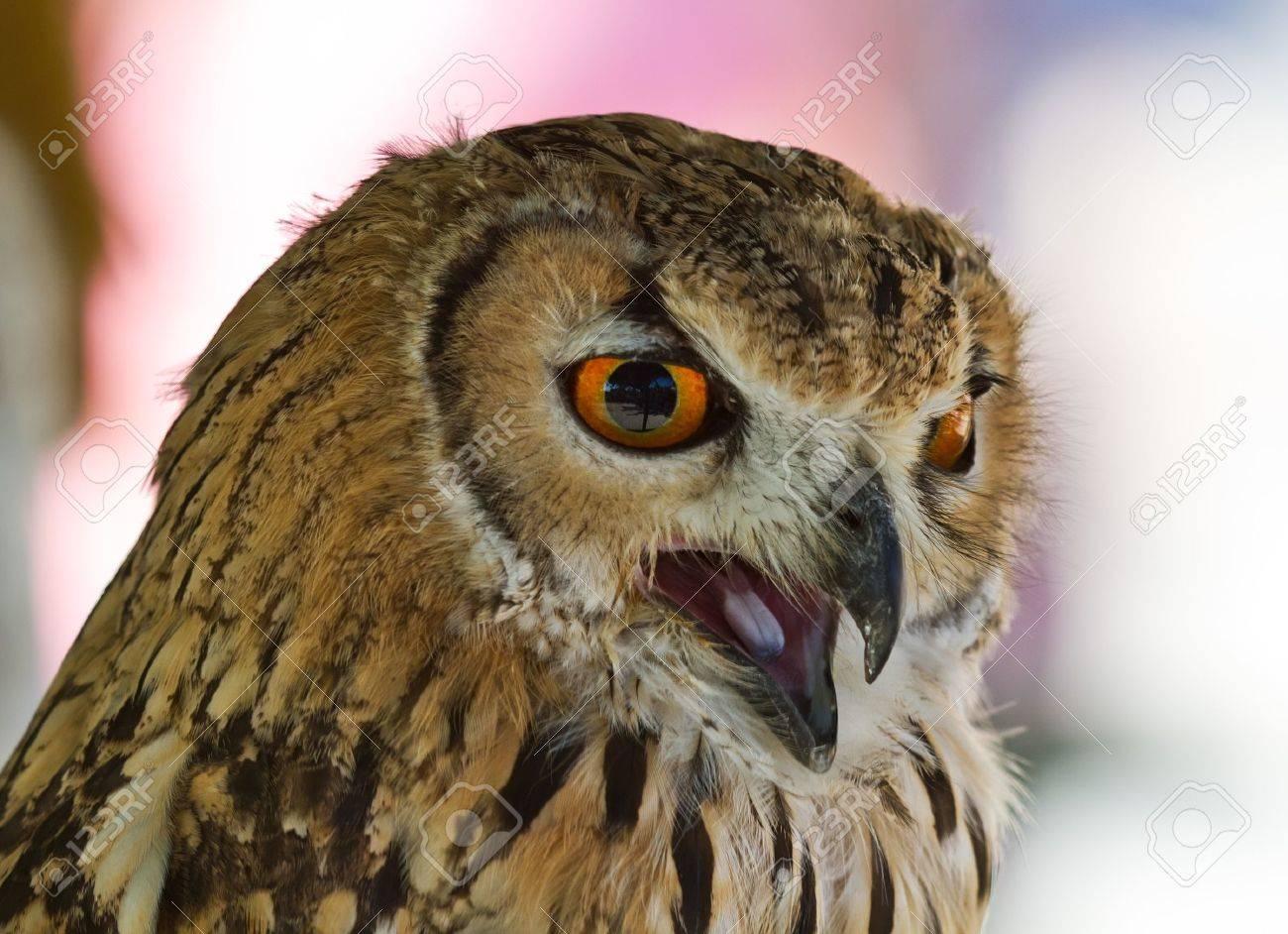 El Búho Es Un Ave Grande Y Poderoso, Más Pequeño Que El águila Pero ...