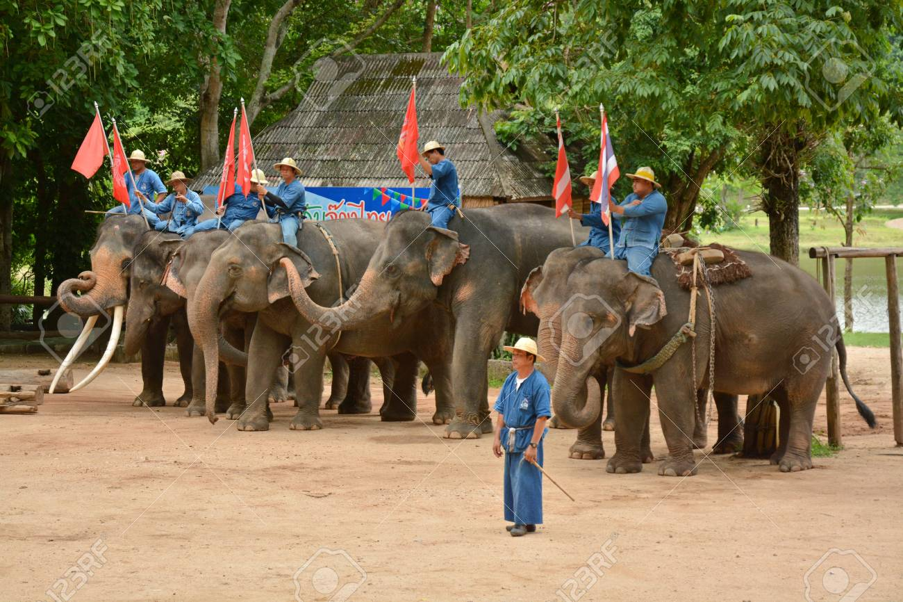 The elephant show one activity that people like to show Thailand