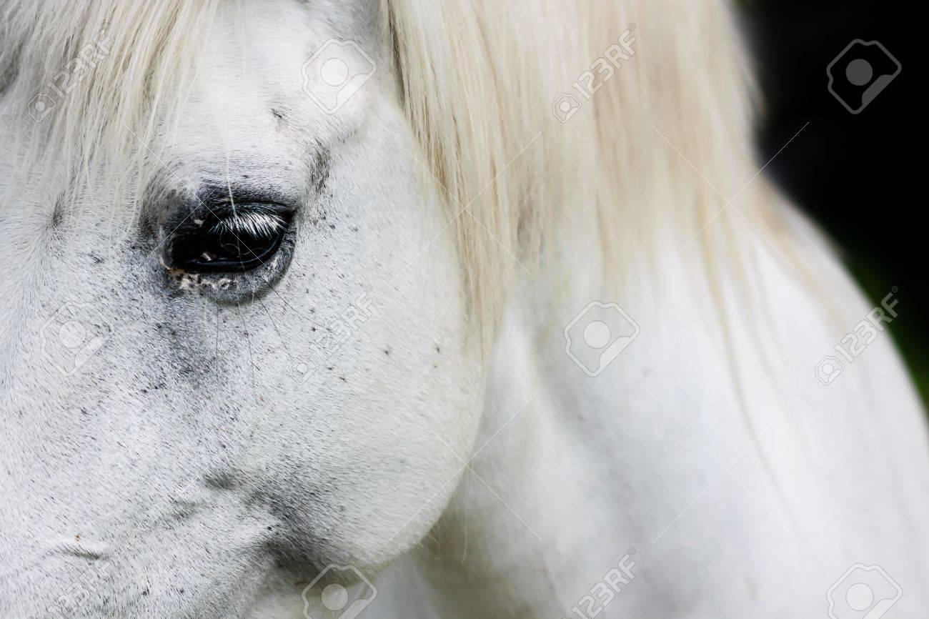 Macro Detail Of A White Horse Eye Stock Photo Picture And Royalty Free Image Image 15935219