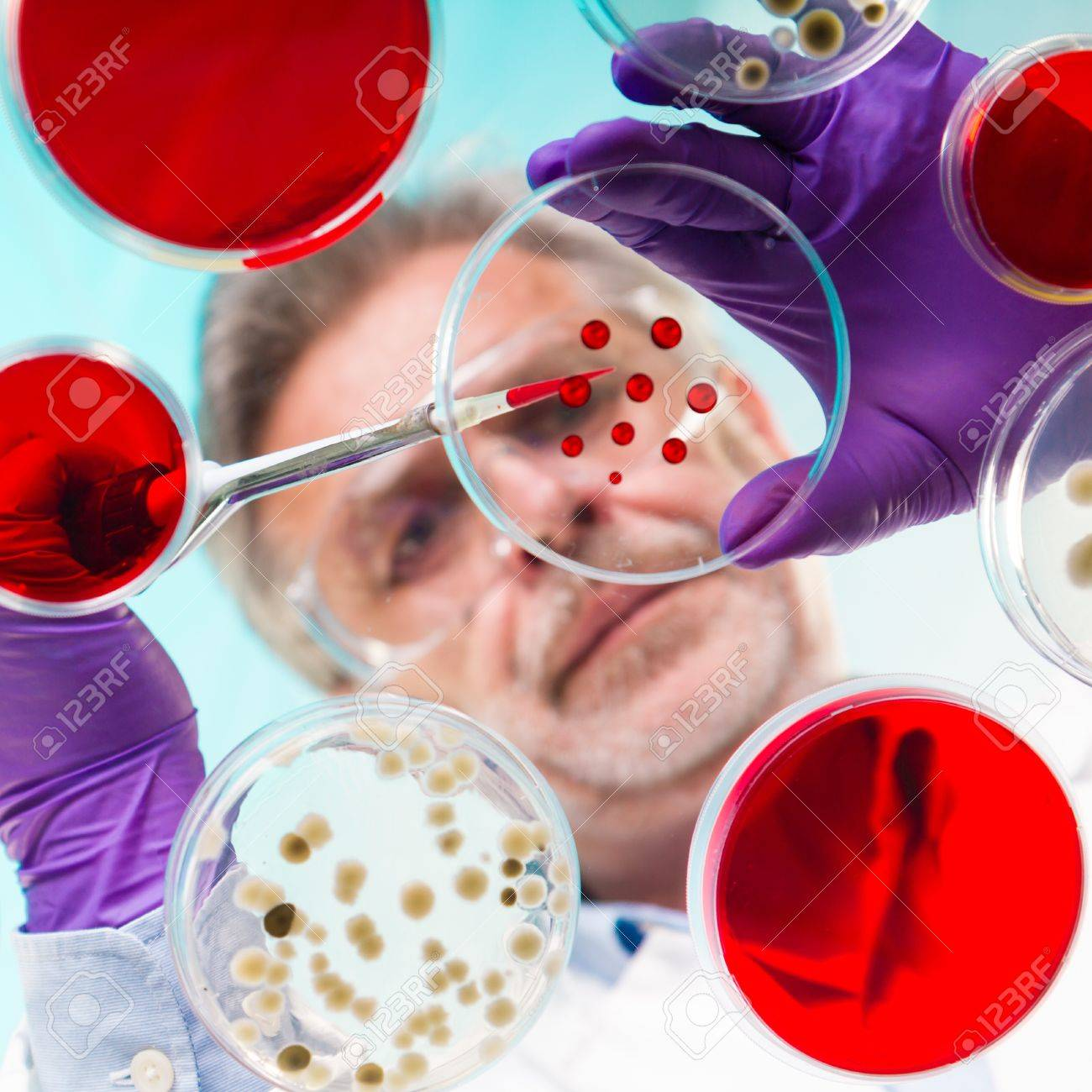 Focused senior life science professional pipetting solution into the pettri dish.  Lens focus on the pipette. Stock Photo - 18153180