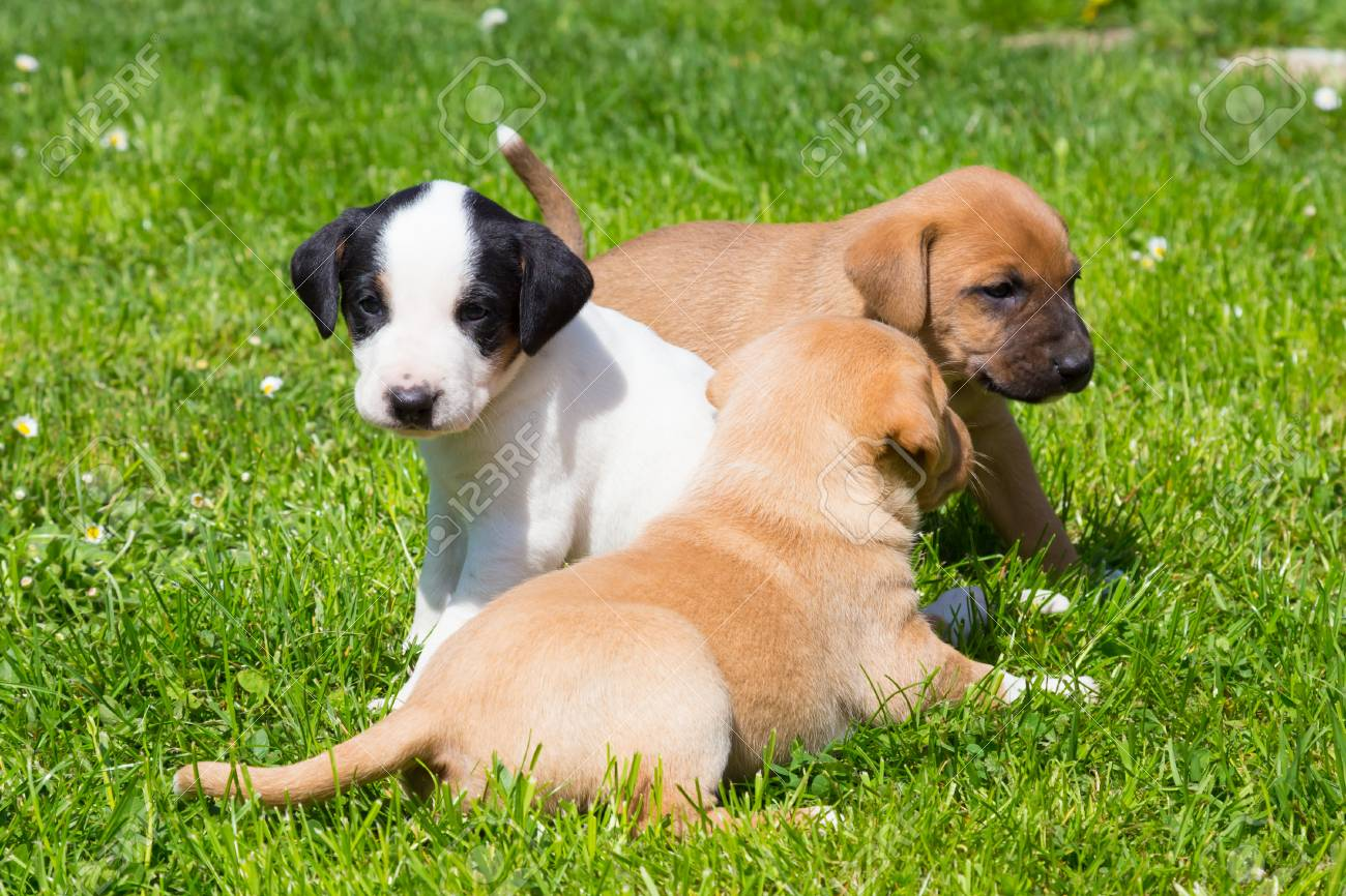 Mixed Breed Adorable Cute Little Puppies Playing Outdoors On Stock