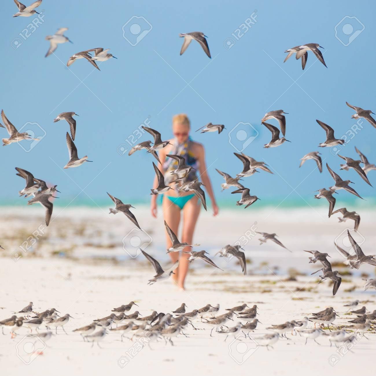 woman walking on the beach among flock of birds beautiful