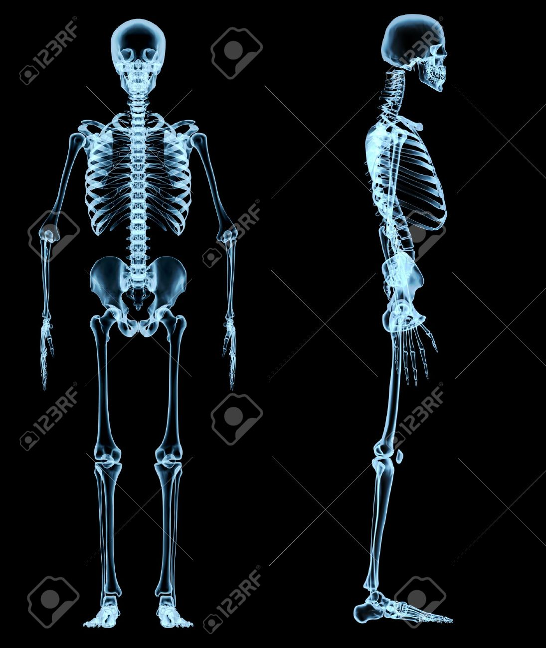 human skeleton under the x-rays stock photo, picture and royalty, Skeleton