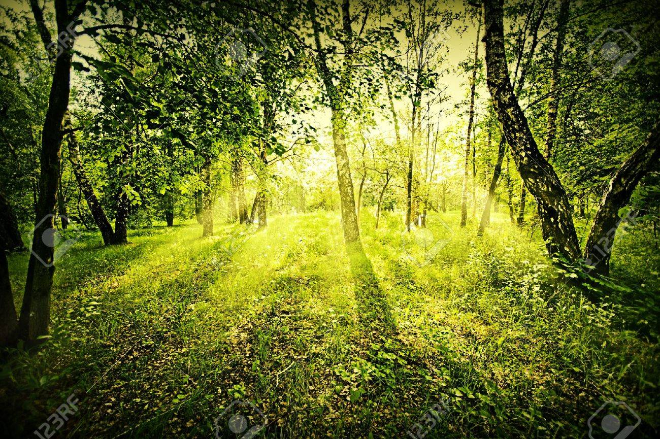 Fantasy green deep forest on summer morning Stock Photo - 15138442