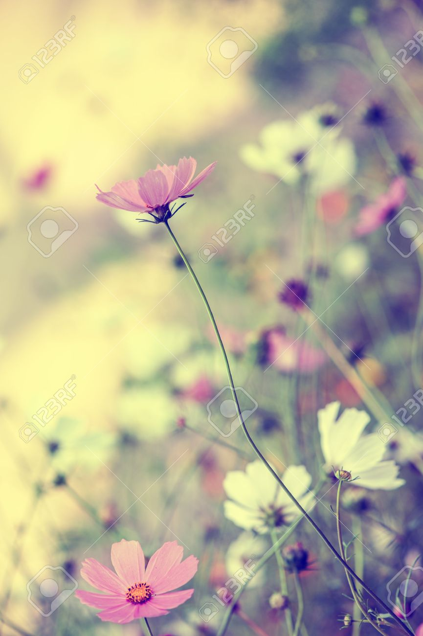 Beautiful defocus blur pastel background with tender flowers  Floral art design in retro style Stock Photo - 22626813