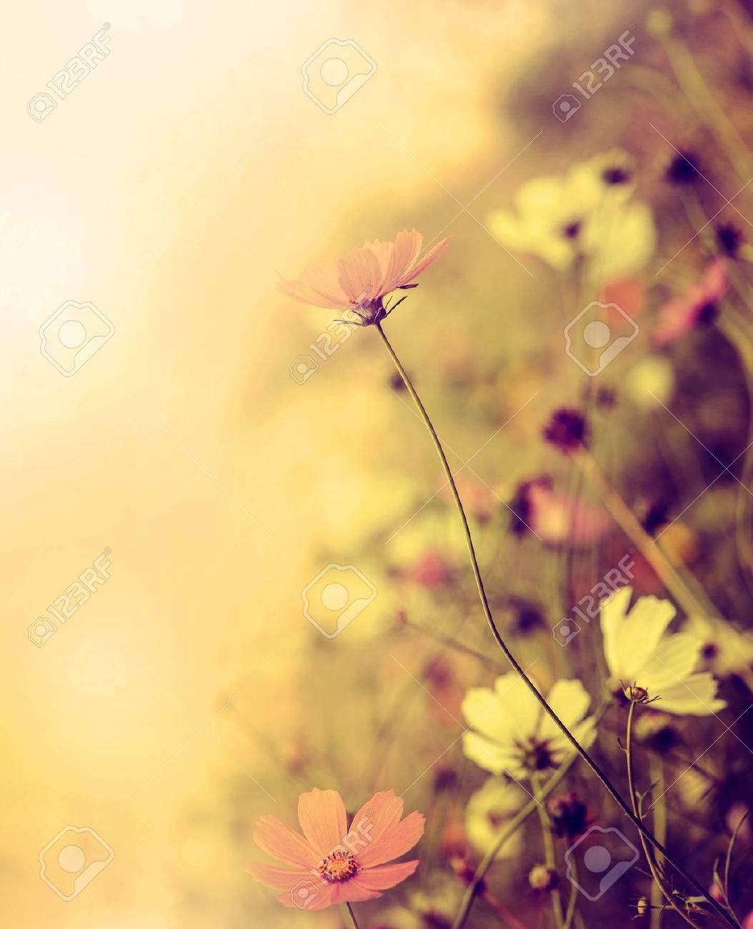 Beautiful defocus blur retro background with tender flowers. Floral art design in retro style Stock Photo - 22626825