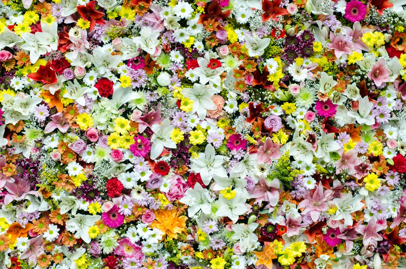 Beautiful Colorful Flower Wall Background Stock Photo Picture And Royalty Free Image Image 72540503