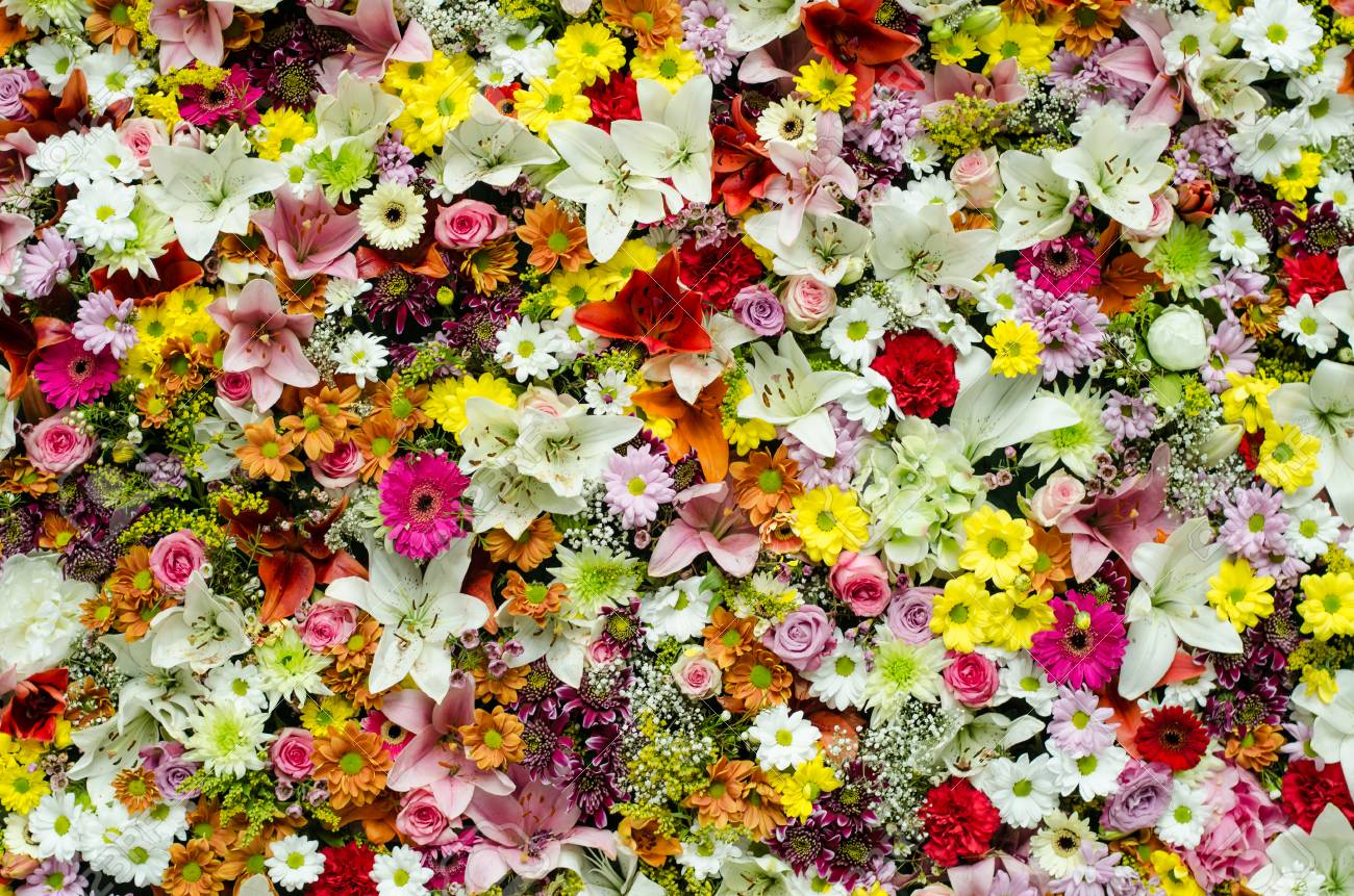 Beautiful Colorful Flower Wall Background Stock Photo Picture And Royalty Free Image Image 72184660