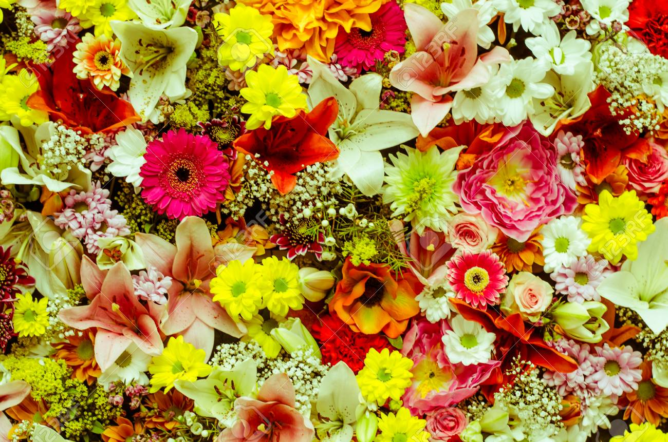 Beautiful Colorful Flower Wall Background Stock Photo Picture And Royalty Free Image Image 72285153