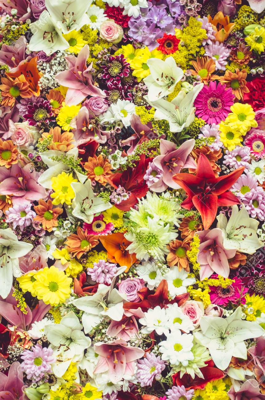 Beautiful Colorful Flower Wall Background Stock Photo Picture And Royalty Free Image Image 72285152