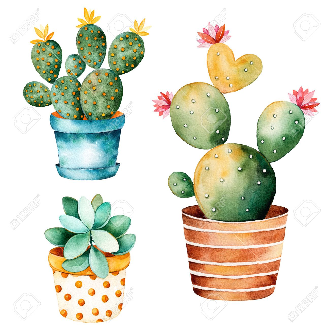 watercolor handpainted plant cactus and succulent plant in clipart