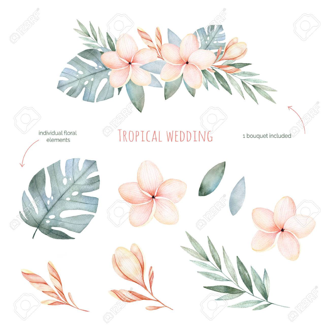 Tropical Wedding Floral Set.Beautiful Soft Floral Collection.. Stock ...