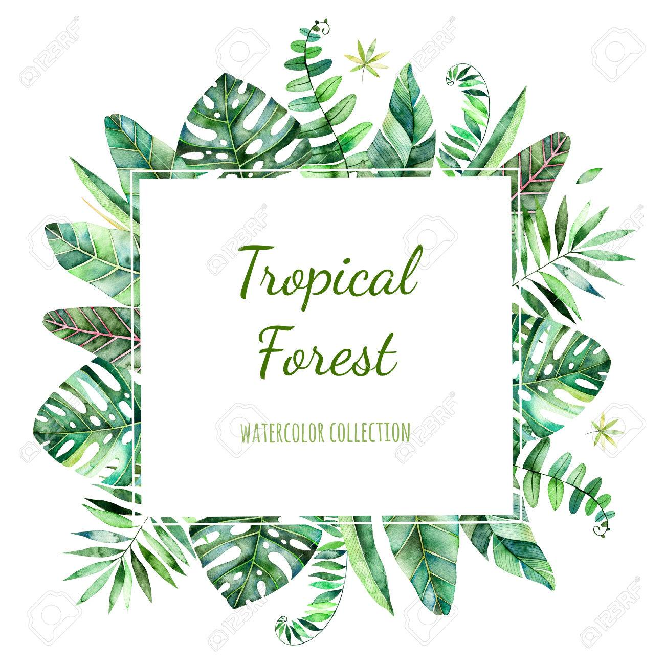 Colorful Floral Frame With Colorful Tropical Leaves Tropical Stock Photo Picture And Royalty Free Image Image 75998993 Tropical rainforests are found in a tropical belt around the equator where annual temperature and precipitation are high. colorful floral frame with colorful tropical leaves tropical