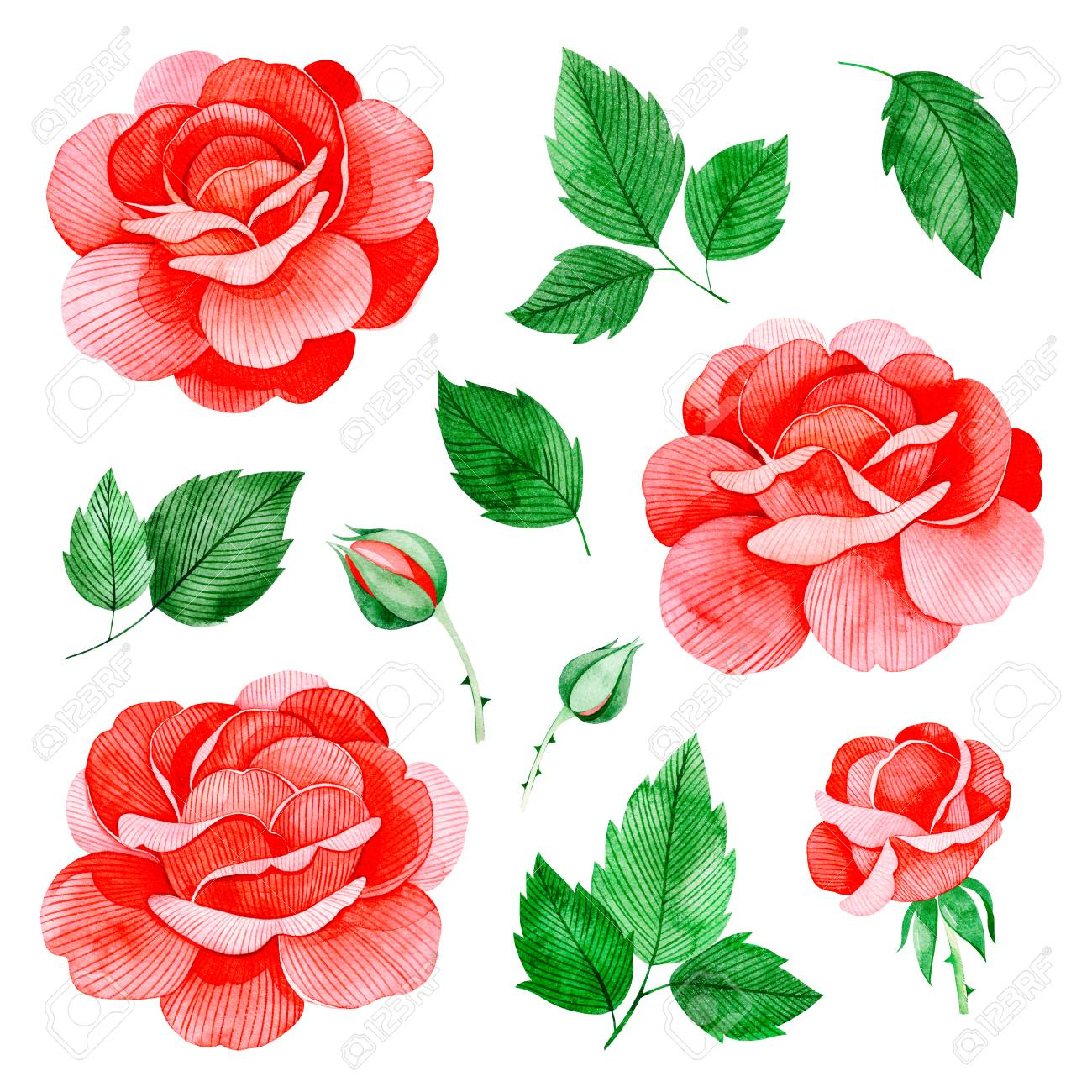Handpainted Watercolor Roses Flowers, And Leaves. Lovely Clipart ...