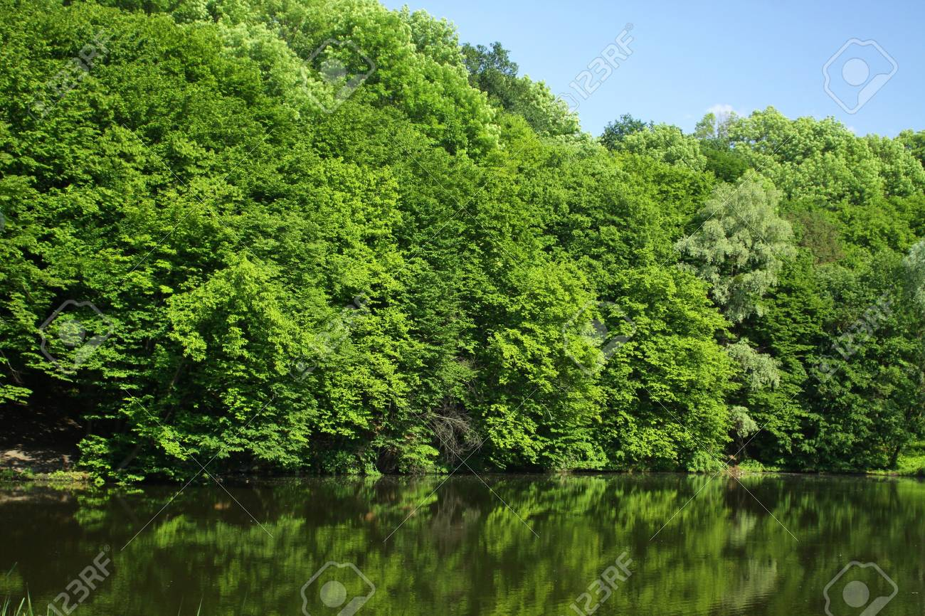 Summer forest with green trees and small lake Stock Photo - 8032436