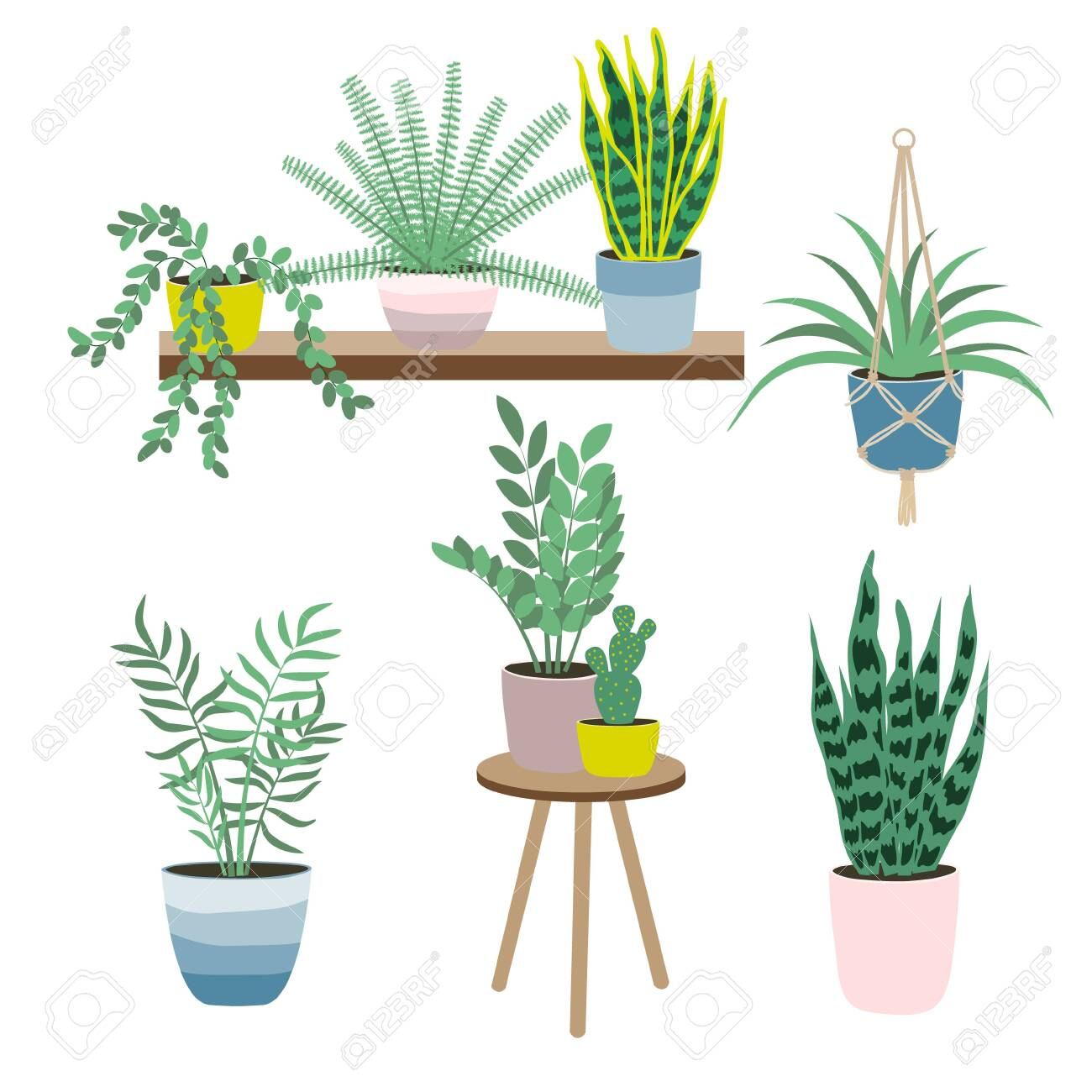 Set Of House Plants Isolated On White Background Potted Plants Royalty Free Cliparts Vectors And Stock Illustration Image 135084353