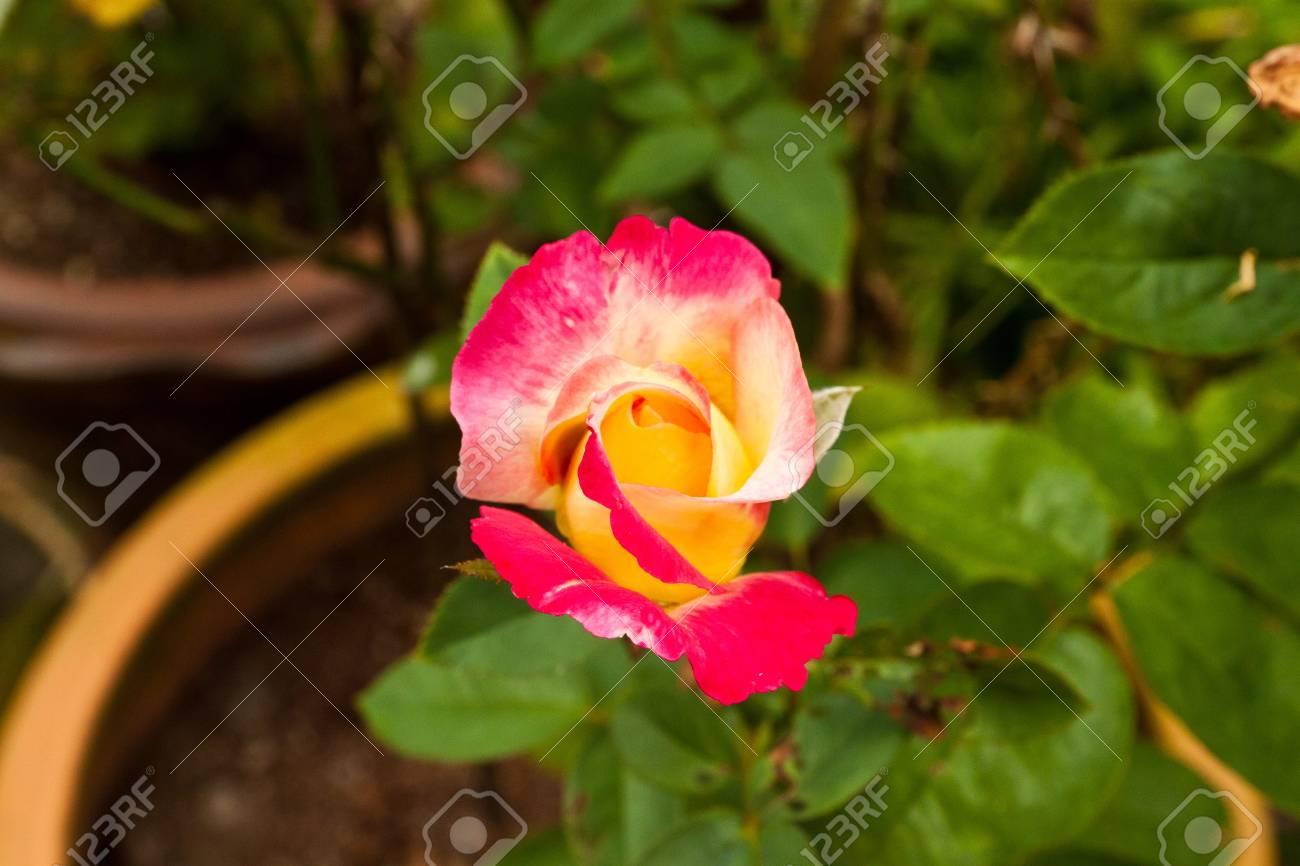 flower color is very beautiful Stock Photo - 11691043
