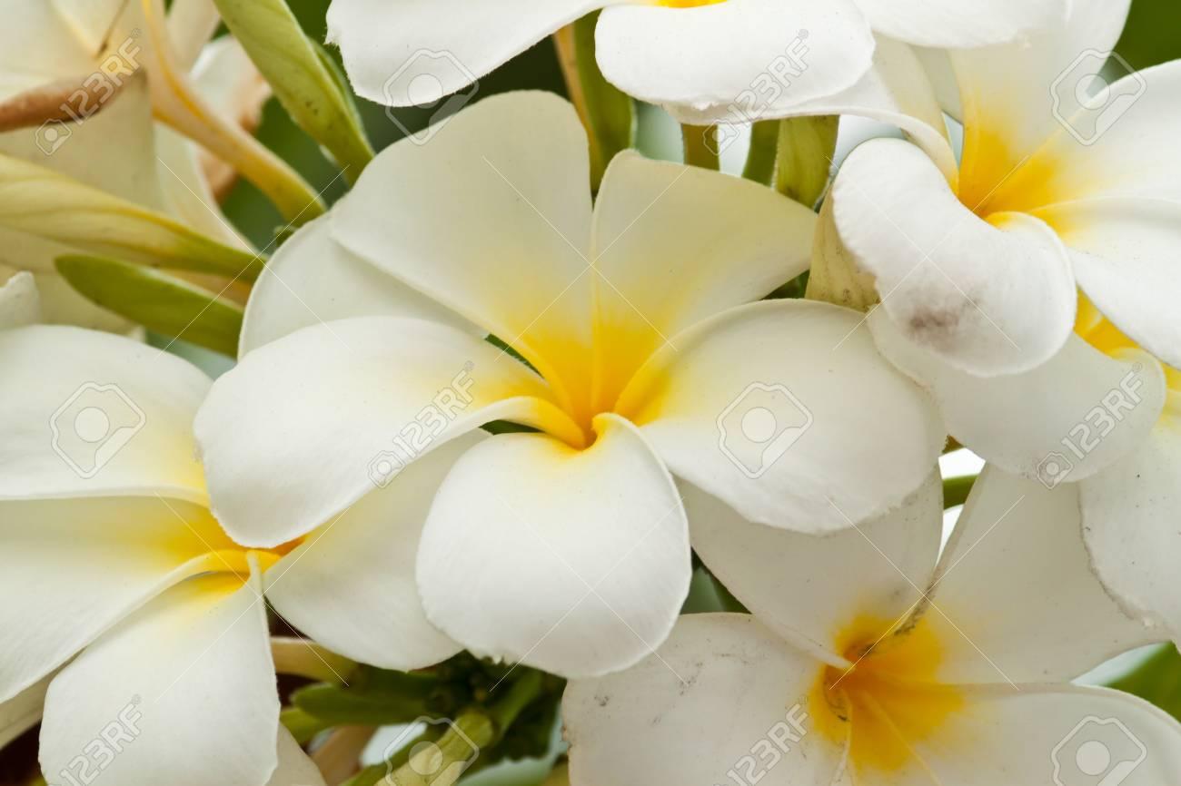 beautiful spring flowers Stock Photo - 12297545