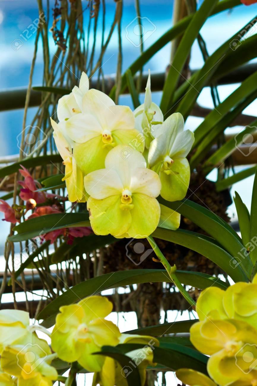 beautiful purple orchid Stock Photo - 17597182