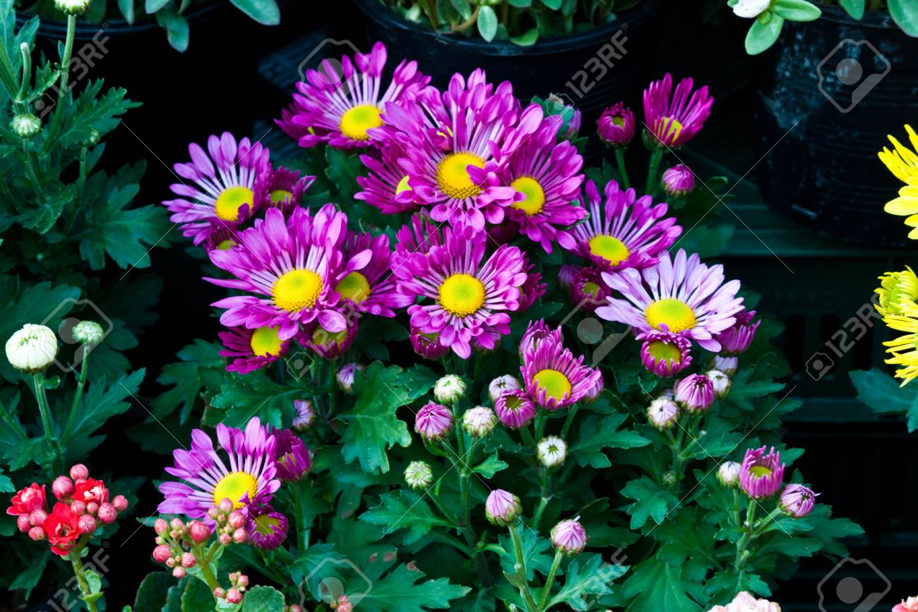 Beautiful Spring Flowers Stock Photo Picture And Royalty Free Image