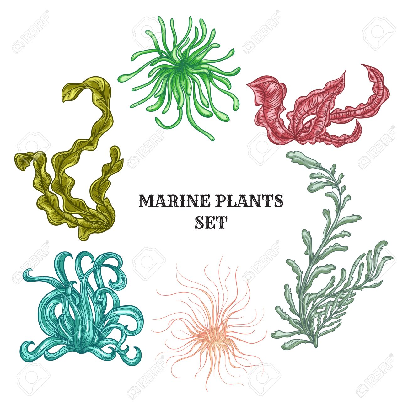 Collection of marine plants, leaves and seaweed. Vintage set of colorful hand drawn marine flora. - 45883231