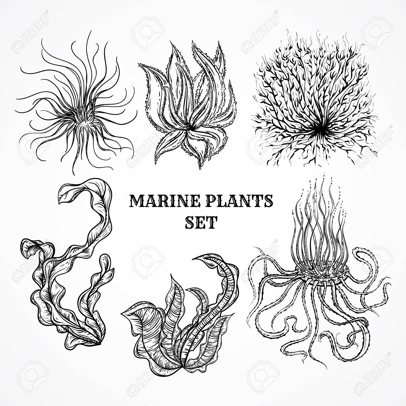 Collection of marine plants, leaves and seaweed. Vintage set of black and white hand drawn marine flora. Isolated vector illustration in line art style.Design for summer beach, decorations. - 45883356