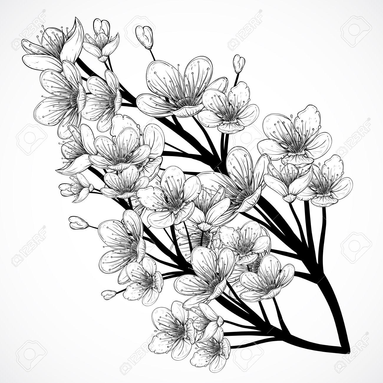 Flor Del Cerezo Ilustración Dibujada De La Vendimia Blanco Y Negro