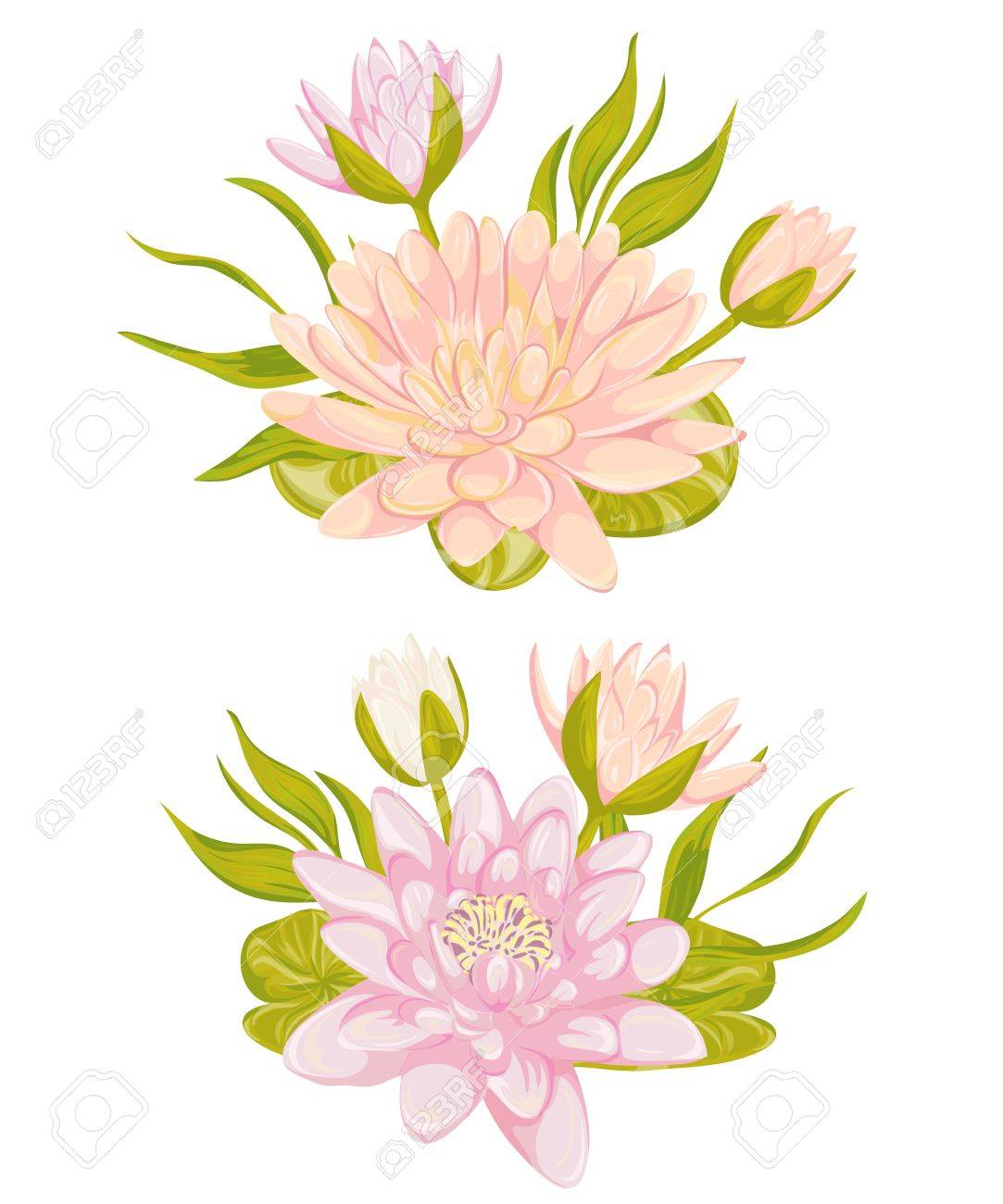 Water lily set collection decorative design elements for wedding collection decorative design elements for wedding invitations and birthday cards flowers leaves and buds vintage hand drawn vector illustration in izmirmasajfo