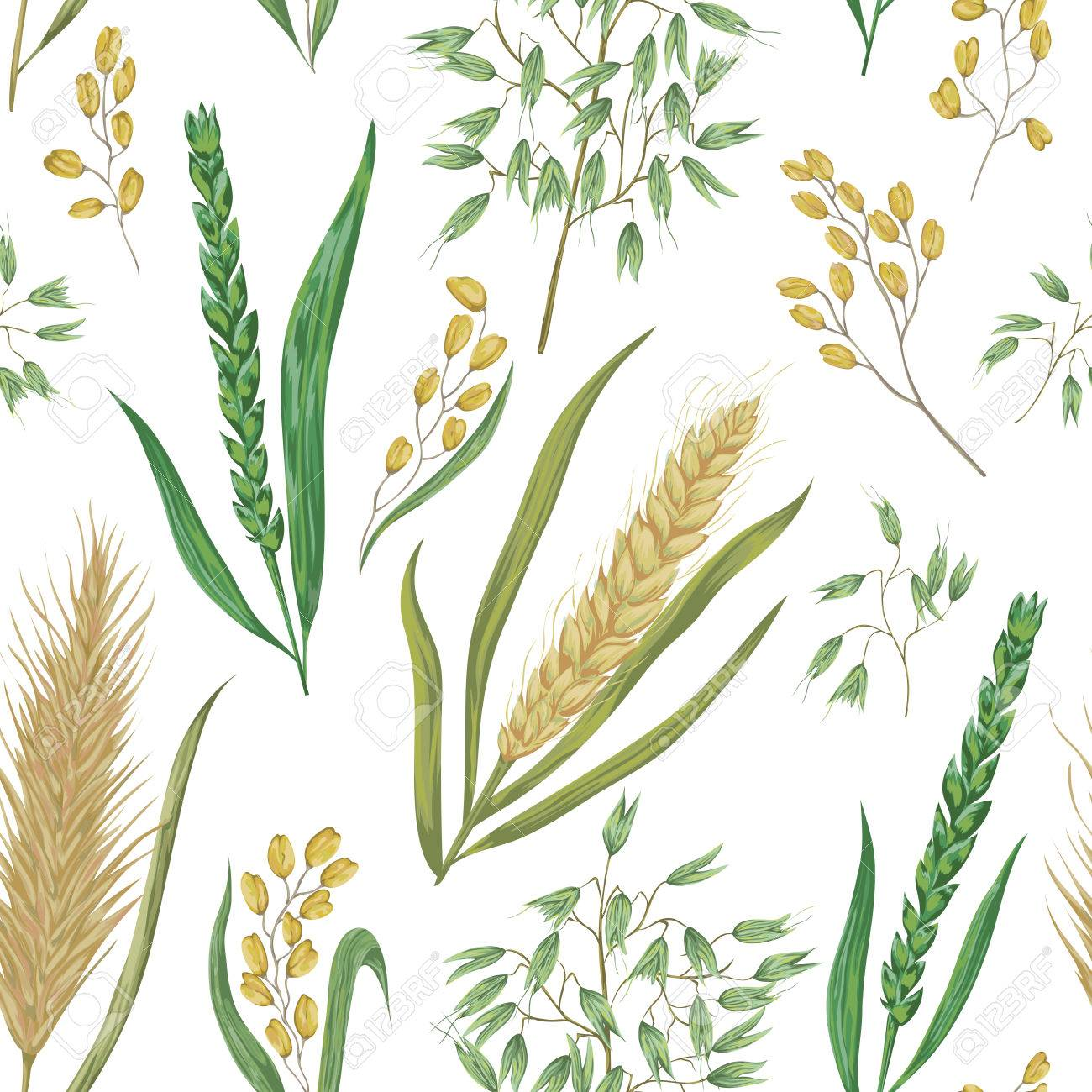 Seamless pattern with cereals. Barley, wheat, rye, rice and oat. Collection decorative floral design elements. Isolated elements. Vintage vector illustration in watercolor style. - 68605834