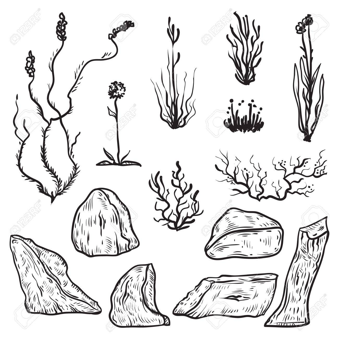 Plantas De La Tundra Del Norte E Icebergs Elementos De Diseño Blanco Y Negro En El Estilo De Dibujo Ilustración De Vector Dibujado A Mano Vintage