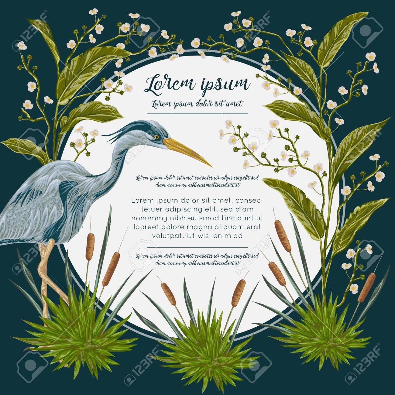 Heron Y Aves Y Plantas Pantanosas. Flora Y Fauna De Los Pantanos ...