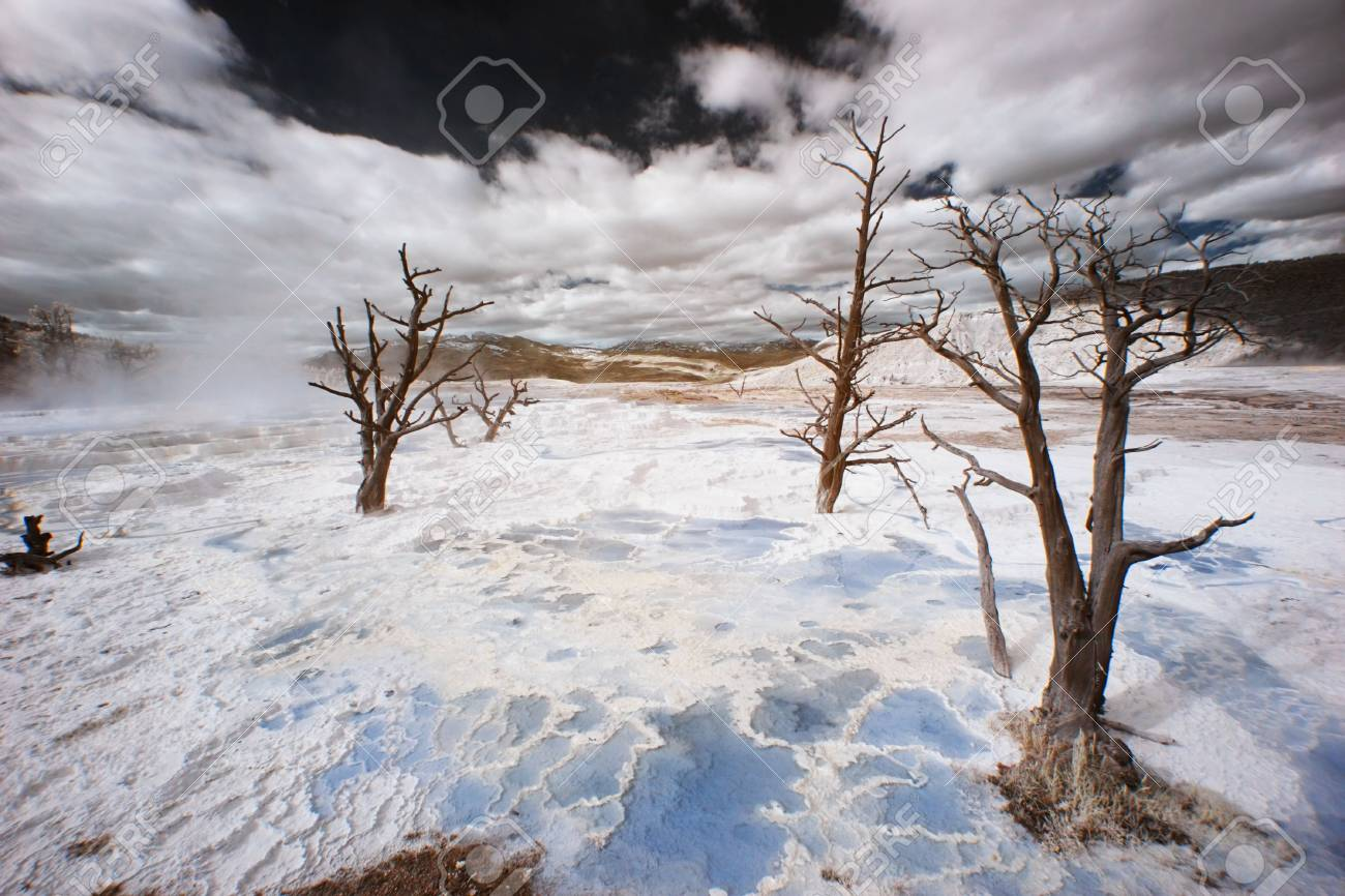 Dead trees in the Canary Spring Terraces of Yellowstone National Park, Wyoming - false-color infrared. Stock Photo - 3578617