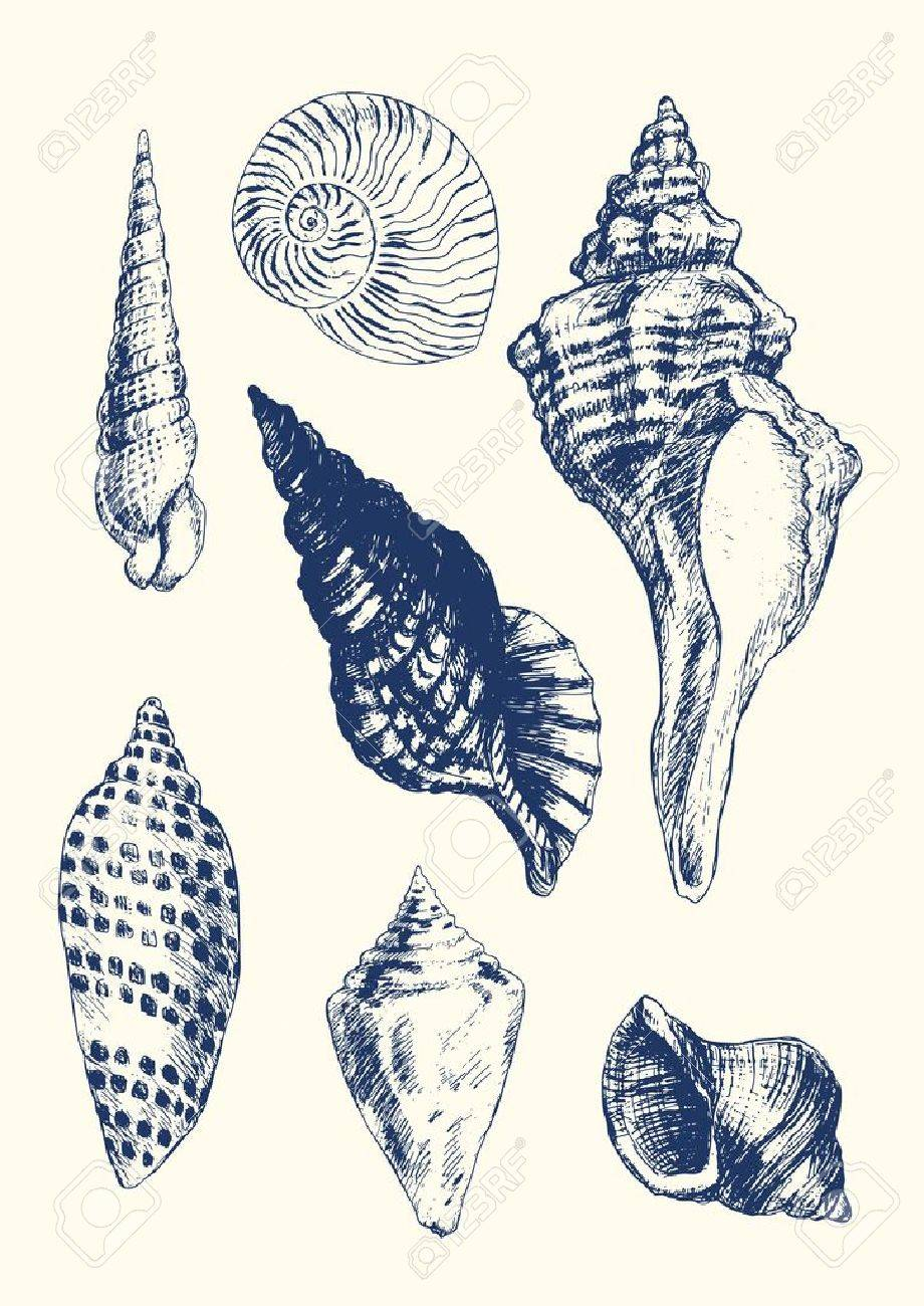 collection of 7 hand drawn seashells royalty free cliparts