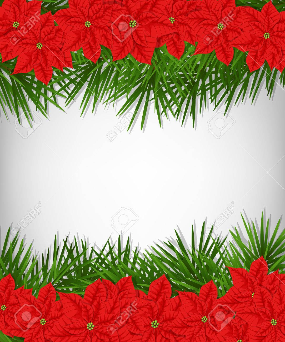 Christmas Card. Borders Made Of Poinsettia Flowers And Fir Branches ...