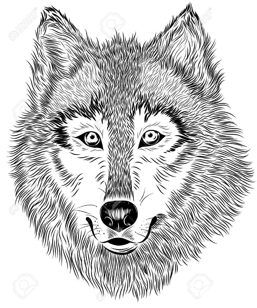 Vector Hand Schwarz Weiß Porträt Von Pelzwolf Auf Weißem Hintergrund