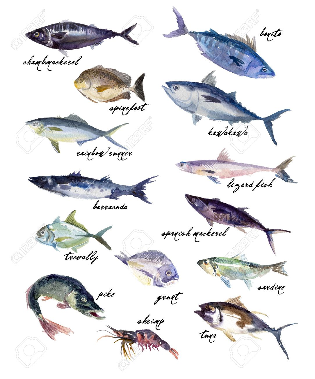 Collection of watercolor hand drawn fish on white background. Good for magazine, menu or book illustration, print design, any graphic design. - 49144343