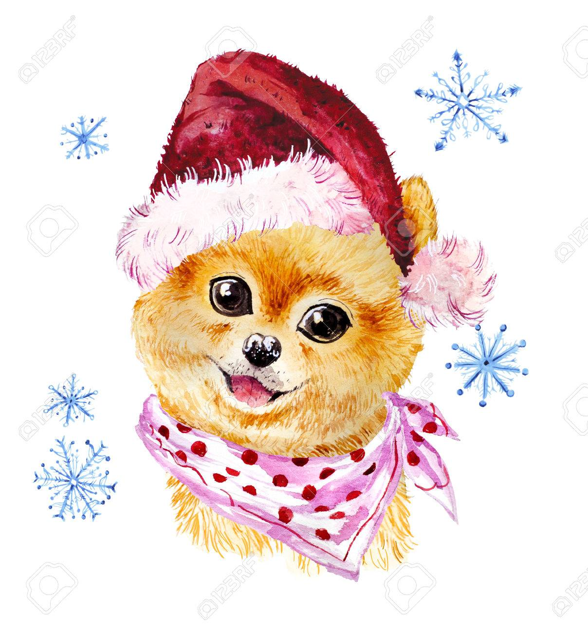 e31c84e47ab Stock Photo - Watercolor artistic xmas dog in santa hat portrait isolated on  white background. Cute pet animal head hand drawn. Pomeranian puppy.